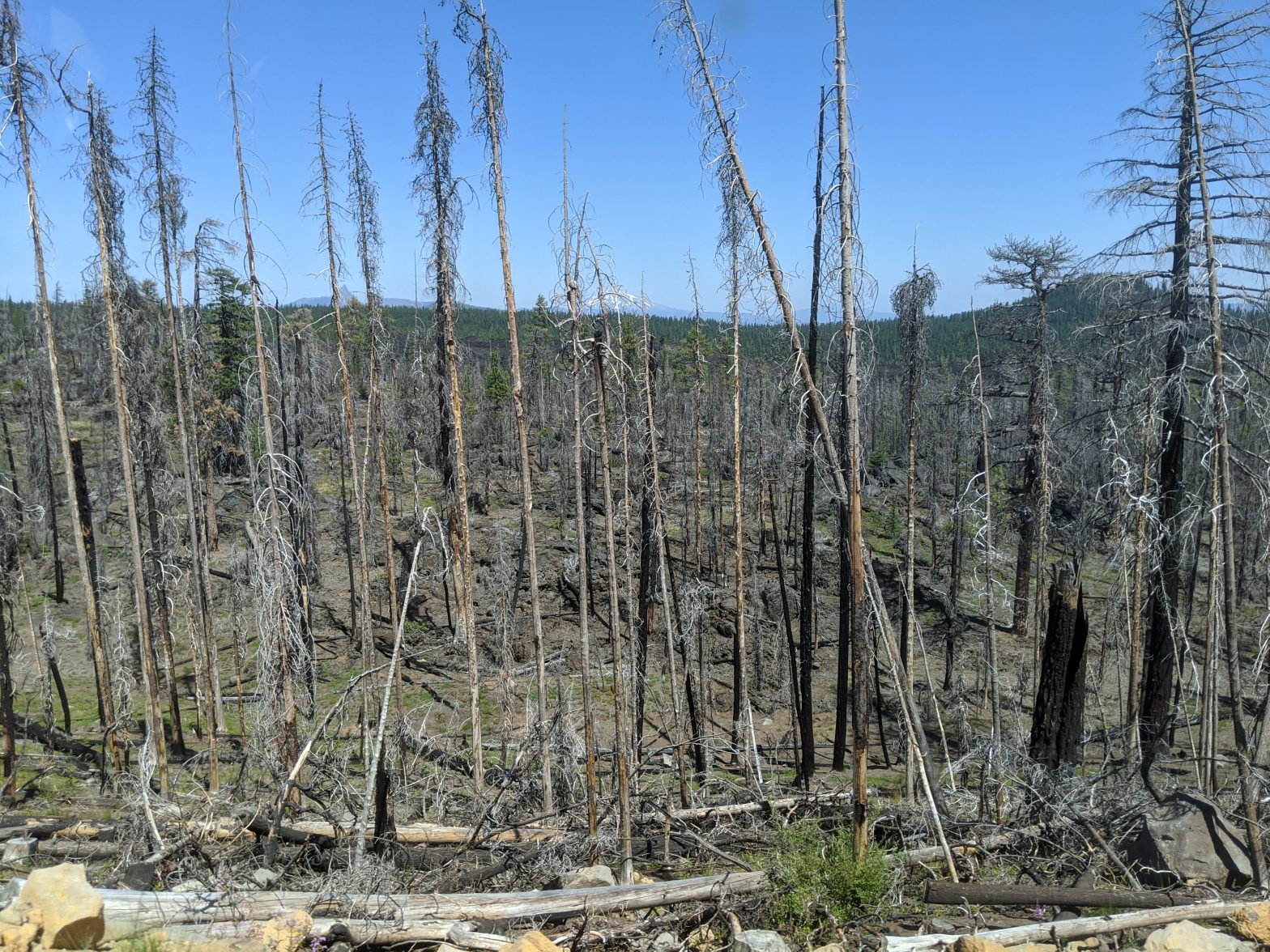 Lave beds in Oregon with burnt trees